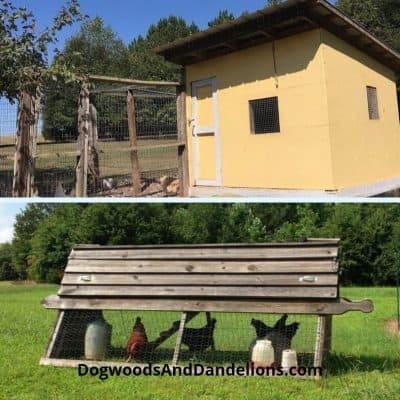 Types of Chicken Coops-What is Best for Your Flock?
