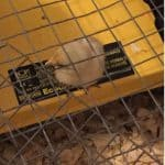 Baby chick on heat source