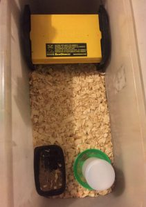 Brooder ready for chicks