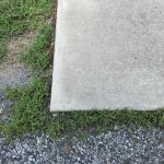 Driveway-before spraying