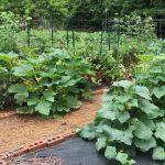 A mid summer garden