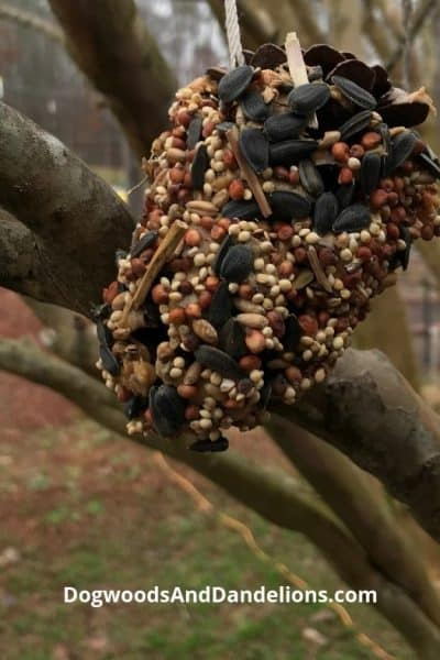 homemade birdseed ornament hanging in a tree
