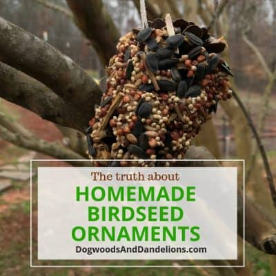 Birdseed Ornaments-The good, the bad, & the ugly