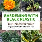 Is Gardening with Black Plastic Right for You