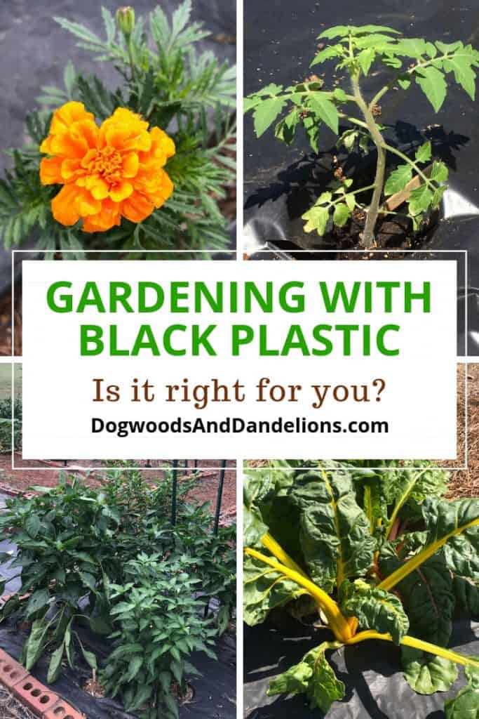 Flowers and vegetables in a black plastic garden