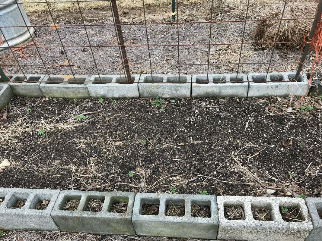 Cinder blocks used to make a raised bed.