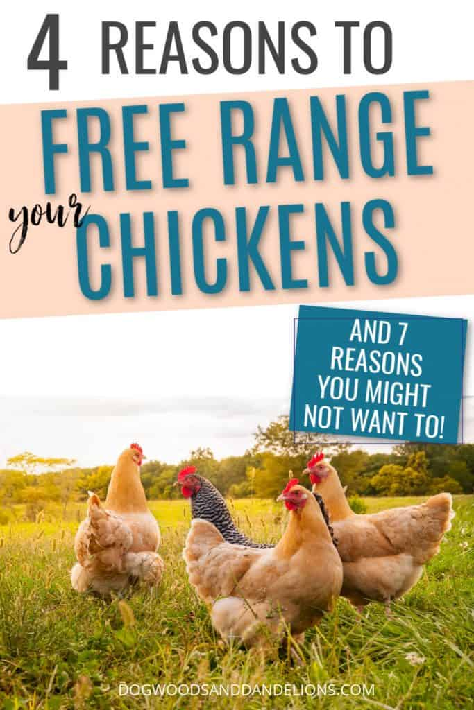 reasons to free range your chickens