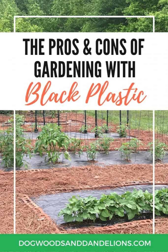 A summer garden growing in black plastic