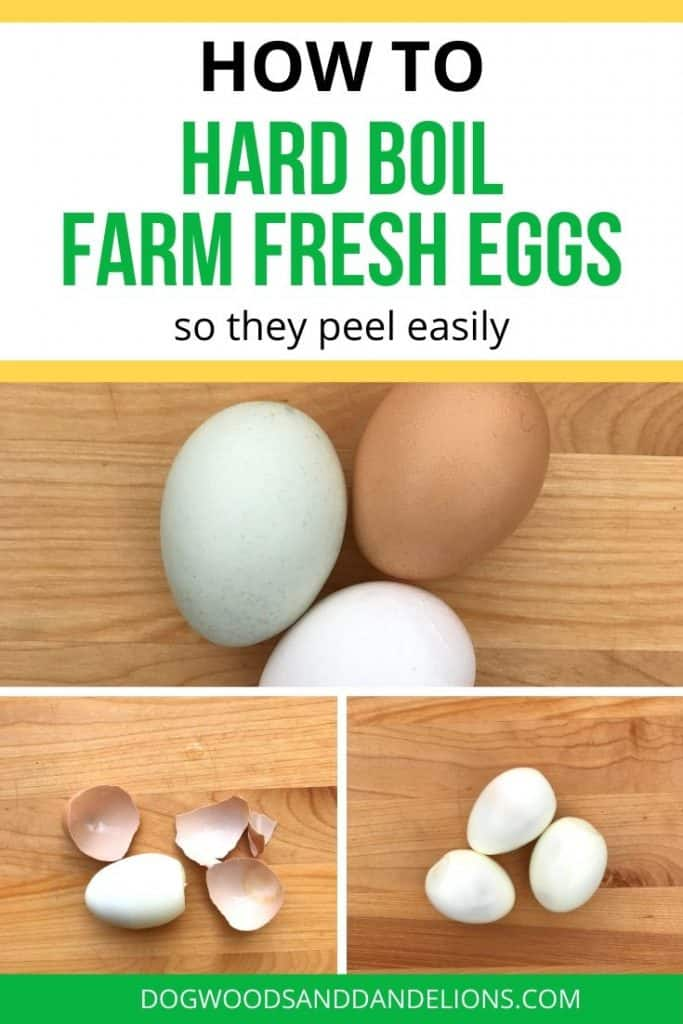 how to hard boil farm fresh eggs so they are easy to peel