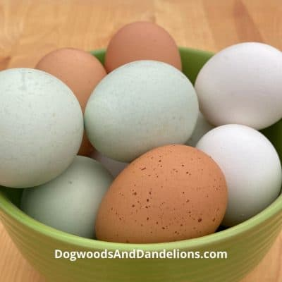 Backyard chicken eggs in a bowl.