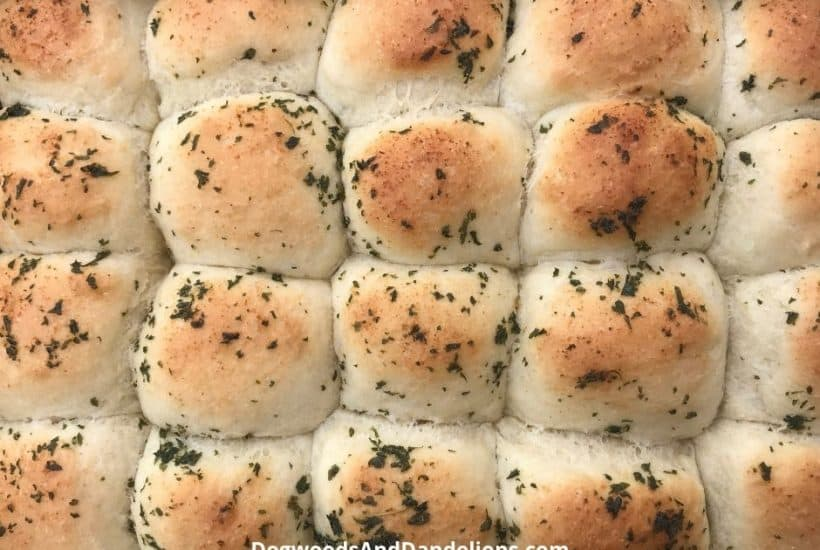 a pan of one hour yeast rolls