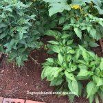 Testing Your Garden Soil
