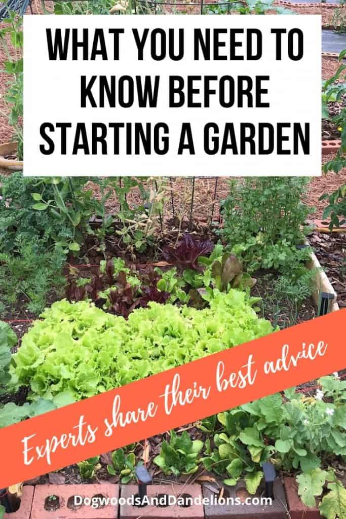 Starting a garden? Lettuce makes a great first vegetable.