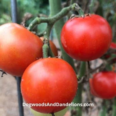 Easy Vegetables to Grow in Your Garden