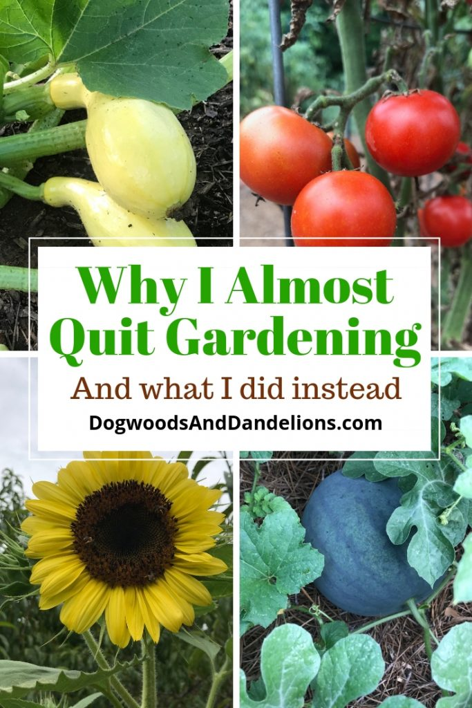 squash, tomatoes, sunflower, watermelon, and why I almost quit gardening
