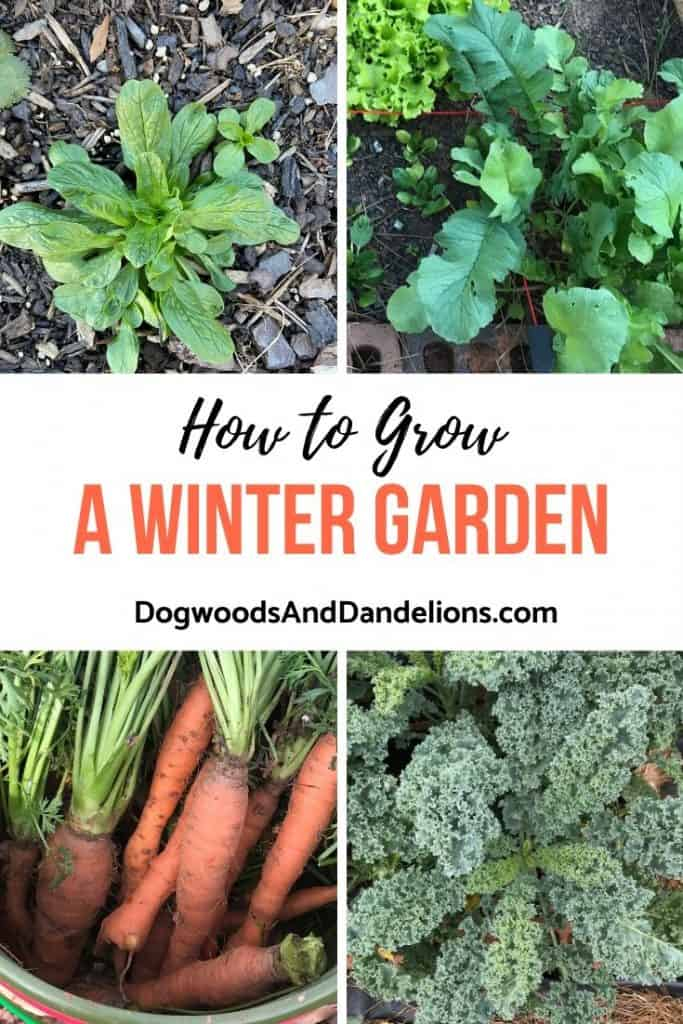 Mache, radishes, carrots, and kale all make good vegetables to grow in a winter garden.